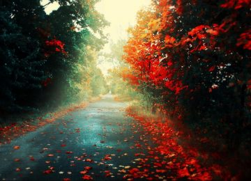 Fall HD Background