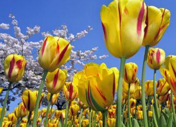 Free HD Flower
