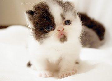Lovely Cute Cat