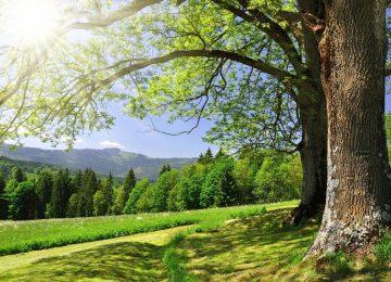 Natural Spring Landscape