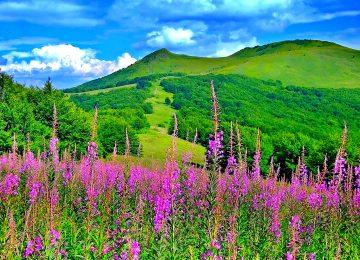 Nice Spring Landscape