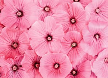 Super Pink Flower