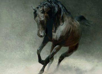 Nice Wild Horse
