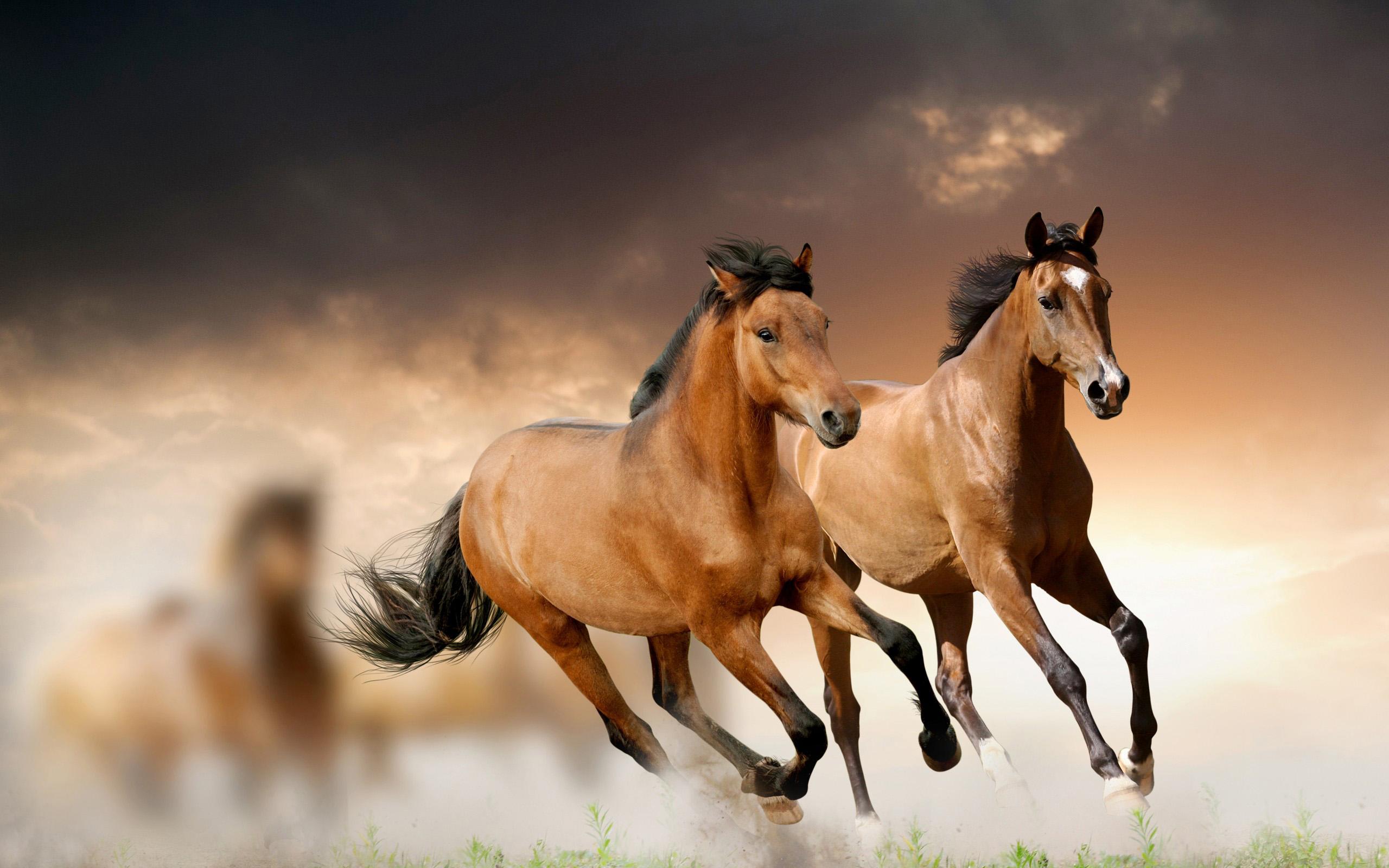 Wild Horse Bulgaria