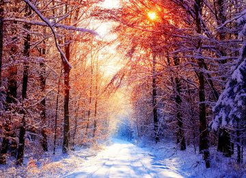 Winter Sunrise Forest Image