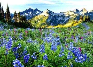 Best Spring Landscape