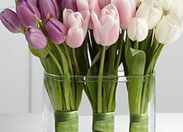 Natural Spring Flower
