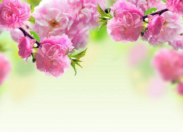 Spring Flower Image