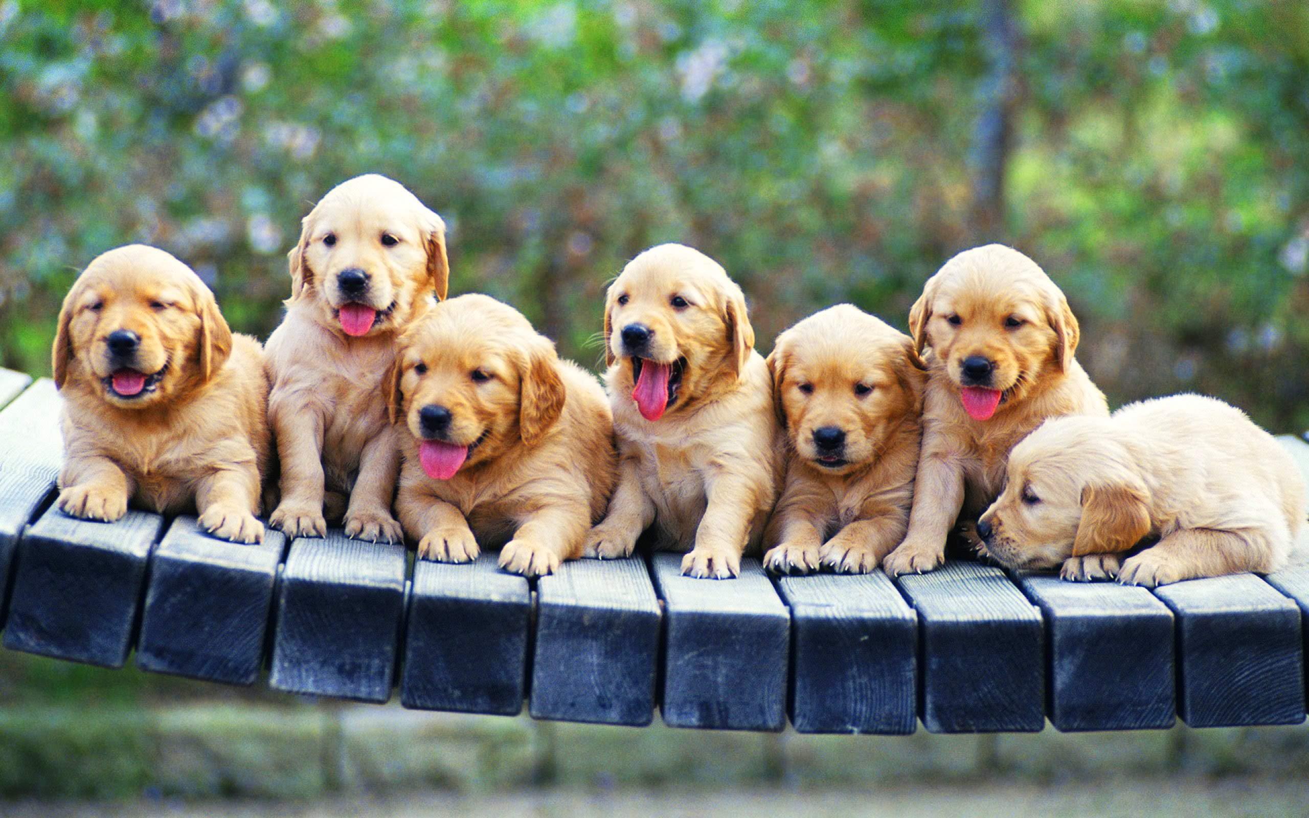 Wonderful Puppy Wallpaper