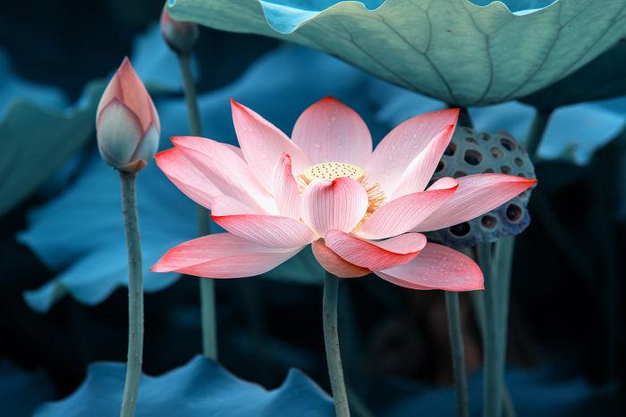 Nice Lotus Flower