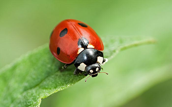 Nice Ladybird