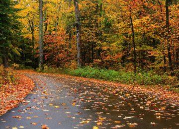 Best Autumn Rain