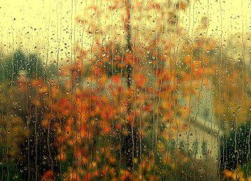 Cool Autumn Rain