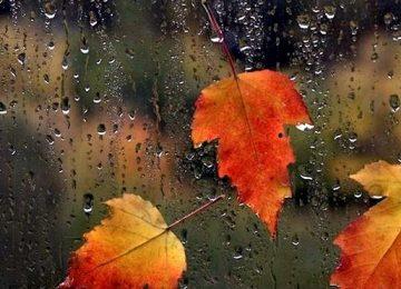 Natural Autumn Rain