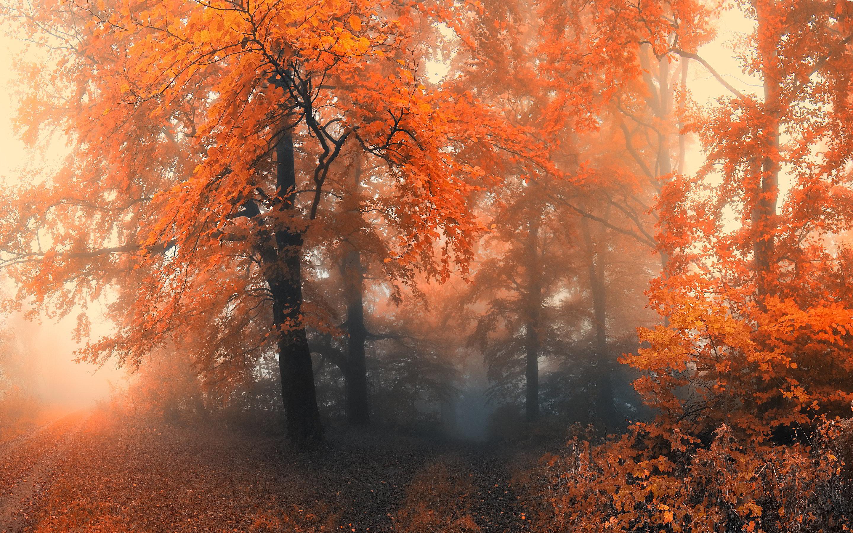 Forest Autumn