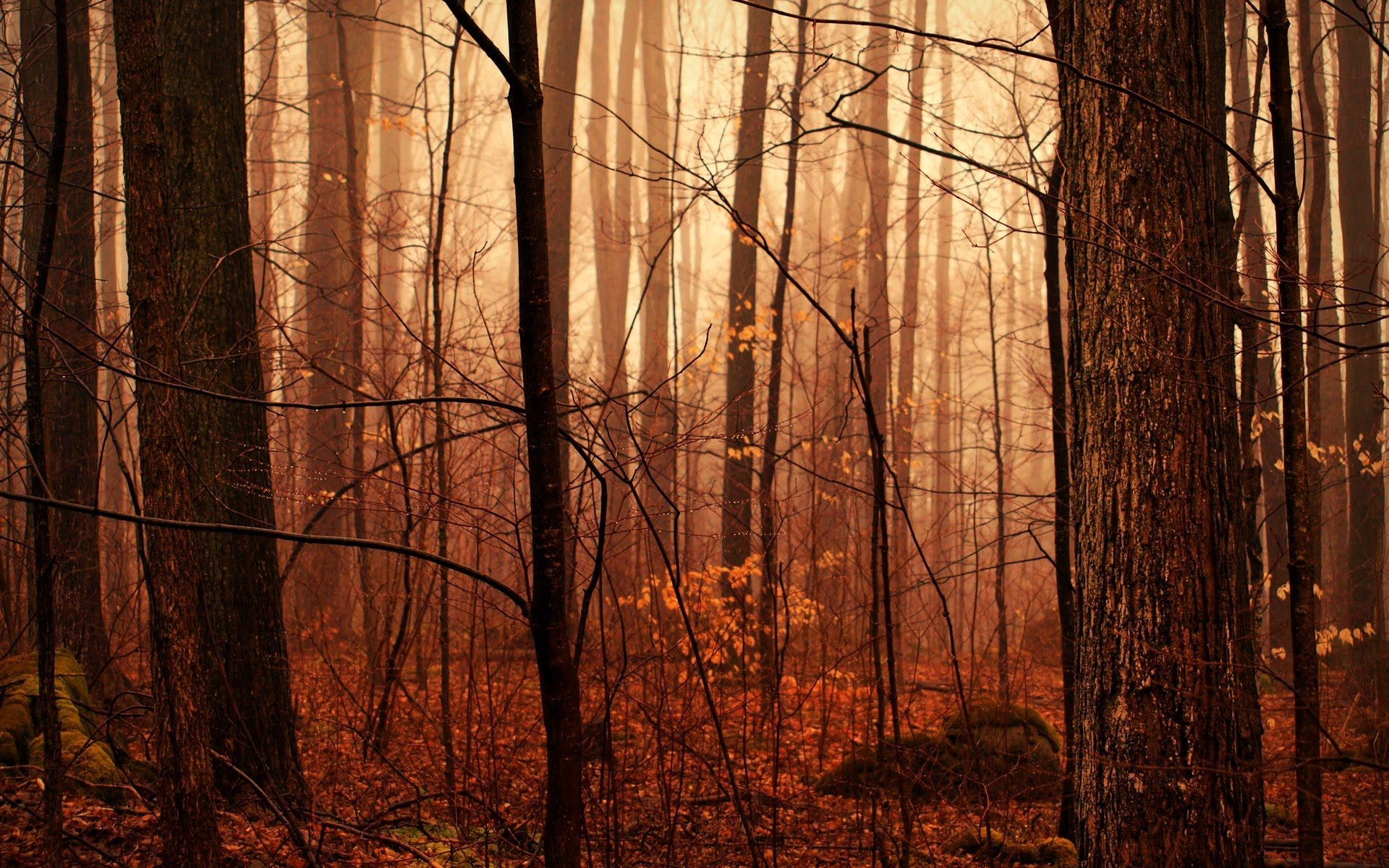 Nice Autumn Forest