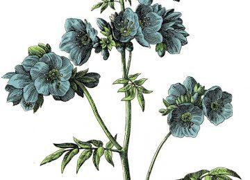 Cool Vintage Flower