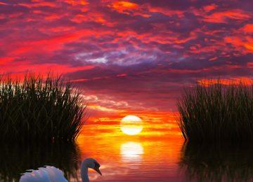 Ocean Sunset Image