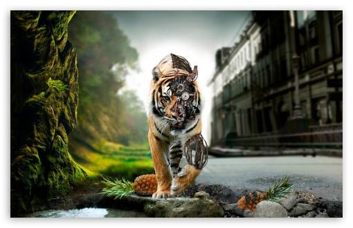 Lion Amazing Wallpaper