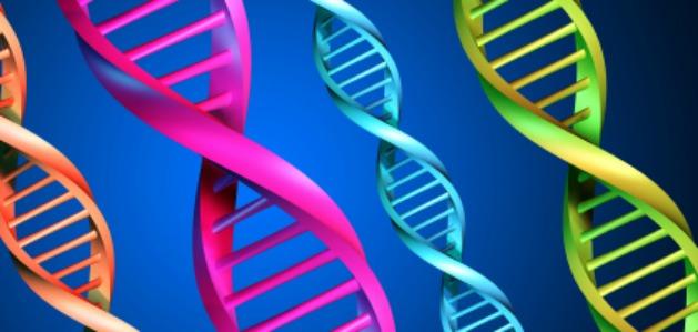 Colorful Genetic Image