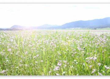 Great Spring Field