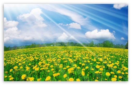 Landscape Spring Field