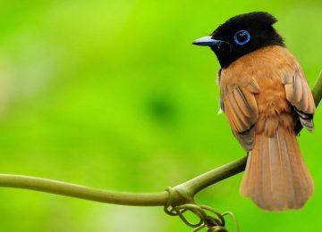 Nice Bird Wallpaper