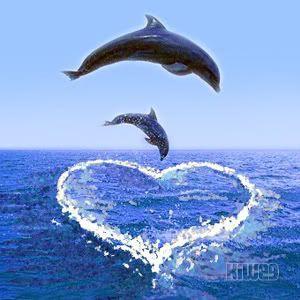 Nice Dolphin Image