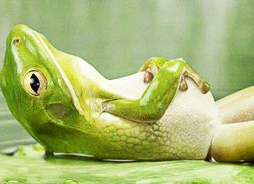 Animal Relax