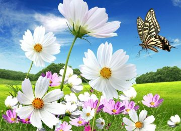 Natural Beautiful Flower
