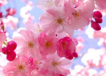 Top Beautiful Flower