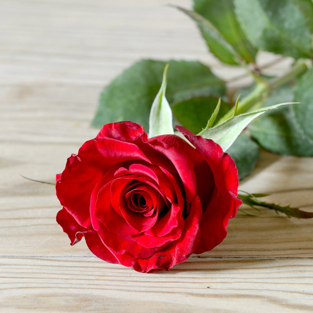 Red rose 2134x2134 full hd wall - Pics of red roses in hd ...