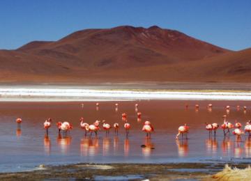Free Atacama Desert