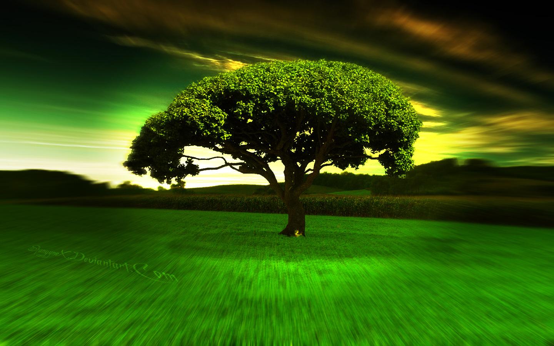 Green Tree HD 1080p Wallpaper