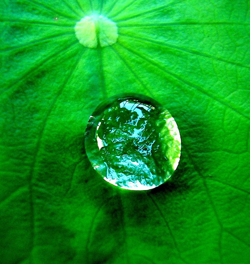 Natural Water Drops on Leaf
