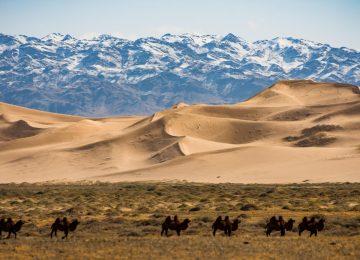 Nice Gobi Desert