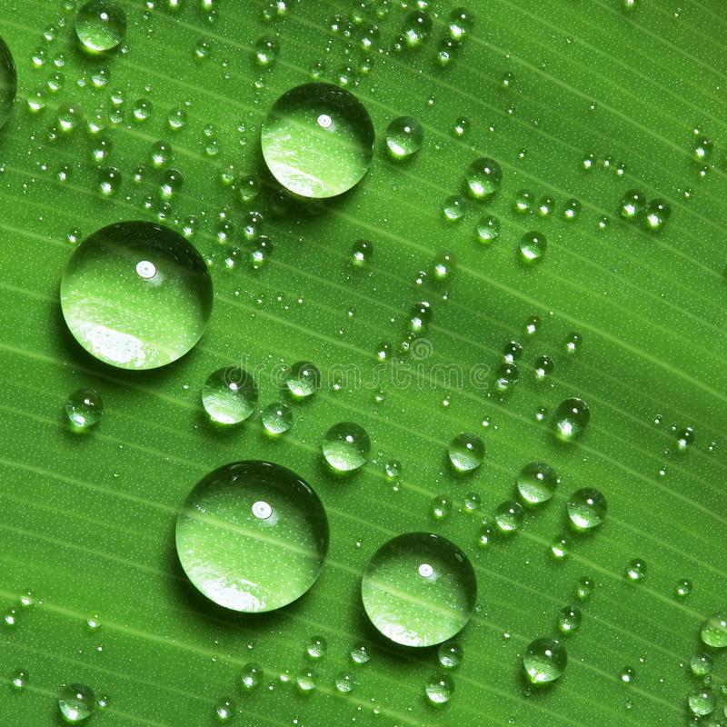 Nice Water Drops on Leaf