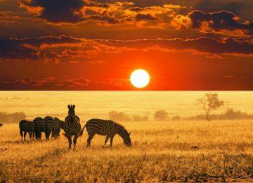 Beautiful Africa Wallpaper
