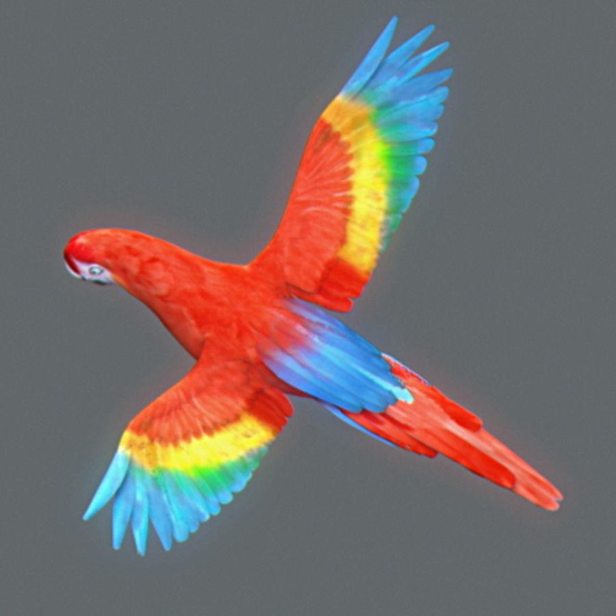 Free Red Parrot