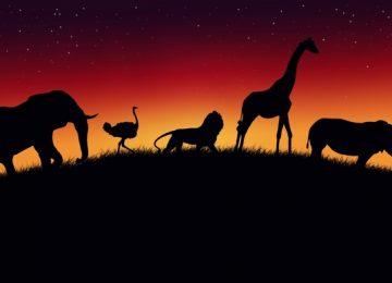 Nice Africa Wallpaper