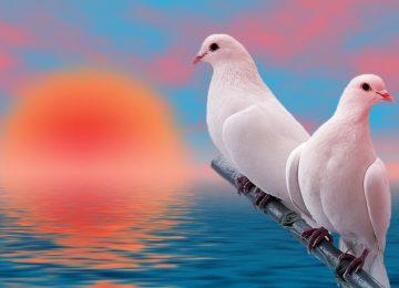 Nice White Dove