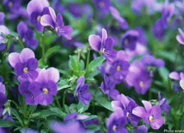 Stunning Violet Flower