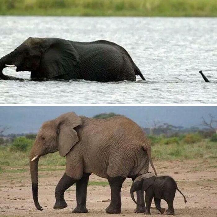 Free Baby Elephant