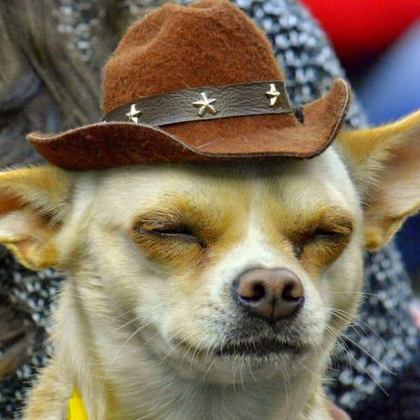 Free Funny Dog