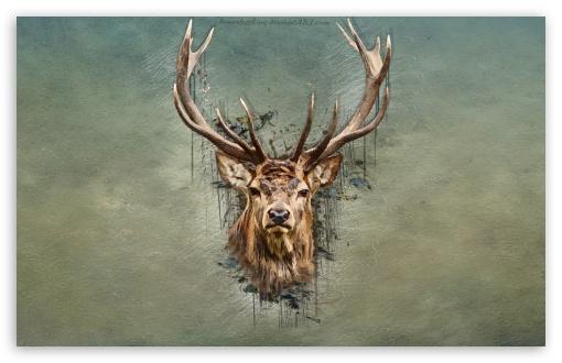 HD Deer Wallpaper