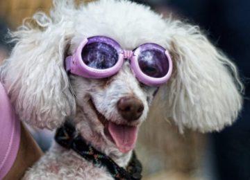 HD Funny Dog