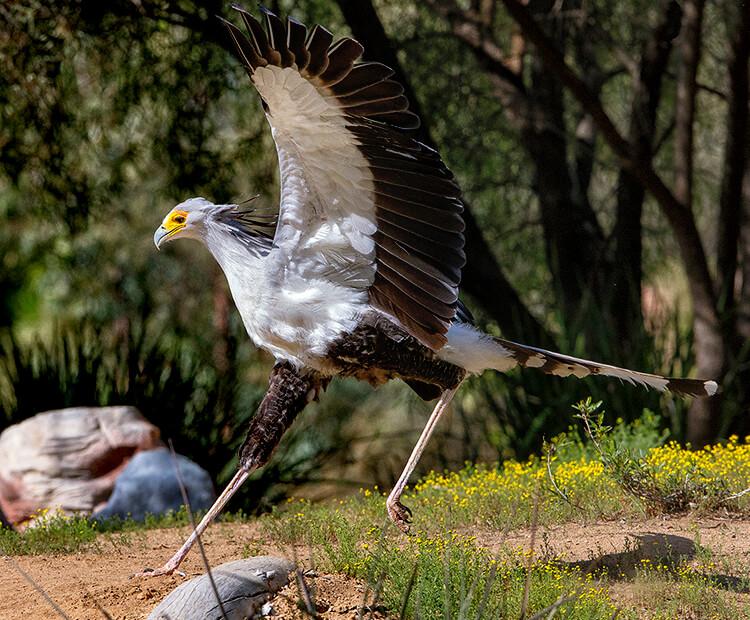 Natural Beautiful Bird