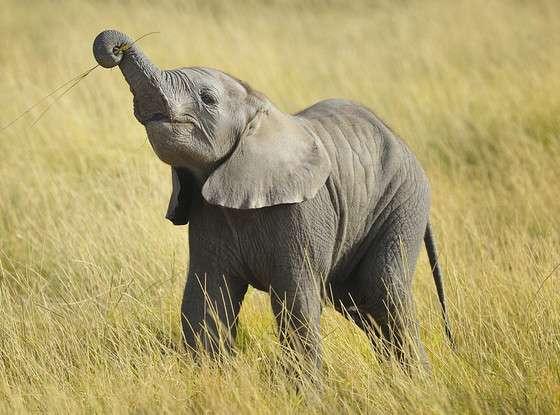 Super Baby Elephant