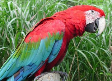 Top Beautiful Bird