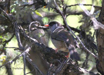 Awesome Brach Bird